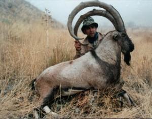 gazelle-doe-hunting